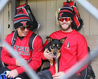 William D. Lewis The Vindicator YSU Baseball players Web Charles, left, and Jeff Wehler with Ali, a dog the tean adopted after it showed up at a recent practice. Charles is keeping the dog at his home. They are pictured at Cene Park during a 10-17-18 practice.