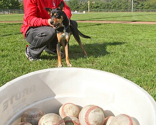 William D. Lewis The Vindicator YSU Baseball unofficial mascot, Ali, a dog the team adopted after it showed up at a recent practice. Player Jeff Wehler share a moment with Ali. Their coach likens the dog to the Brown's Rally Possum.