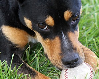 William D. Lewis The Vindicator YSU Baseball unofficial mascot, Ali, a dog the team adopted after it showed up at a recent practice. .. Their coach likens the dog to the Brown's Rally Possum.