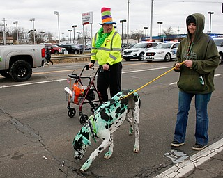 Amber Cribbs, of New Castle, walks her Great Dane Duncan, whom she dyed green with food coloring, with Randy Pope, of Pulaski, Pa., at the end of the Mahoning Valley St. Patrick's Day Parade in Boardman on Sunday afternoon. EMILY MATTHEWS | THE VINDICATOR