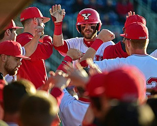 NILES, OHIO - MAY 14, 2019: Youngstown State's Jeff Wehler is congradulated by the dugout after hitting a 3-run home run off Ohio State starting pitcher Jake Vance in the third inning of Tuesday nights game against Ohio State at Eastwood Field. Ohio State won 7-4. DAVID DERMER | THE VINDICATOR