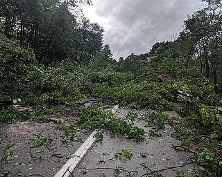 Heavy storms caused trees to fall on 82 west. DUSTIN LIVESAY | THE VINDICATOR