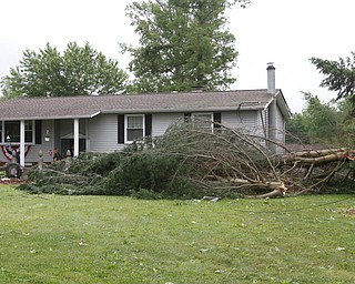 ROBERT K.YOSAY  | THE VINDICATOR..People from Warren to Brookfield are cleaning up after SundayÕs damaging winds after learning that the mess indeed was created by a tornado and possibly a series of touchdowns...the trees miss the house but took down electric on Kincaid East Rd NS