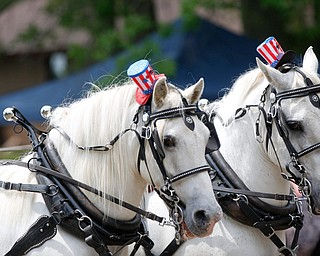 Horses wear patriotic hats as they pull the wagon for Ponytails, a pony ride business and petting zoo, in the Austintown Fourth of July parade on Raccoon Road Thursday afternoon. EMILY MATTHEWS | THE VINDICATOR