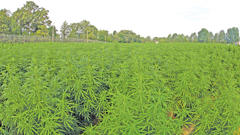 Ohio Lawmakers Approve Bill to Legalize Hemp and CBD