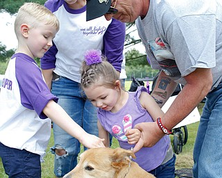 Harper Foley, 4, of Cortland, center, pets Gracy, the service dog of John Rossi, right, with her brother Emmett Foley, 6, and mother Jade Foley at the 41st annual Cars in the Park car show in Boardman Park on Sunday afternoon. Proceeds from the car show will go to Harper, who has Dravet Syndrome, a catastrophic form of epilepsy. EMILY MATTHEWS | THE VINDICATOR