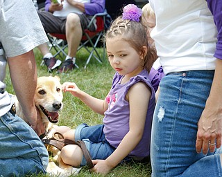 Harper Foley, 4, of Cortland, pets Gracy, a service dog, at the 41st annual Cars in the Park car show in Boardman Park on Sunday afternoon. Proceeds from the car show will go to Harper, who has Dravet Syndrome, a catastrophic form of epilepsy. EMILY MATTHEWS | THE VINDICATOR