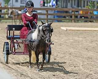 ROBERT K.YOSAY  | THE VINDICATOR..The 173rd version of the Canfield Fair opened Wednesday to mid 70 degrees, sun, and fries and sausage sandwiches  mini pony hitch 4-H judging  Mini Driving  as Jamie Rummel of Canfield and Misty...