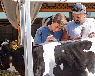 Crist Martig, right, and his son Christian Martig, 14, both of Salem, groom their cow Zyke in preparation for the Jr. Fair Dairy Showmanship at the Canfield Fair on Thursday. EMILY MATTHEWS | THE VINDICATOR