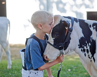 Zachary Norris, 9, of Minerva, kisses his cow Dakota before the Jr. Fair Dairy Showmanship at the Canfield Fair on Thursday. EMILY MATTHEWS | THE VINDICATOR