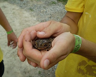 Exploring wildlife in the backyard